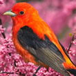 Aves Mensagens e Frases