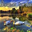 Boa Tarde Espanhol Mensagens e Frases