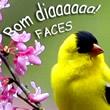 Bom Dia Facebook