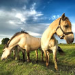Cavalos Mensagens e Frases
