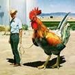 Dia da Avicultura Mensagens e Recados