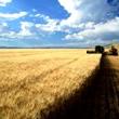 Dia do Agricultor Mensagens e Recados
