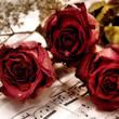 Dia do Amor Mensagens e Recados