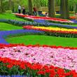 Dia do Jardineiro Mensagens e Recados