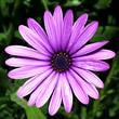 Flores Mensagens e Recados