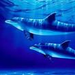 Golfinhos Mensagens e Frases