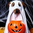 Halloween Engraçado Mensagens e Frases