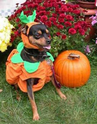 Halloween Engraçado Imagem 7