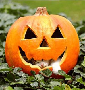 Halloween Engraçado Imagem 8