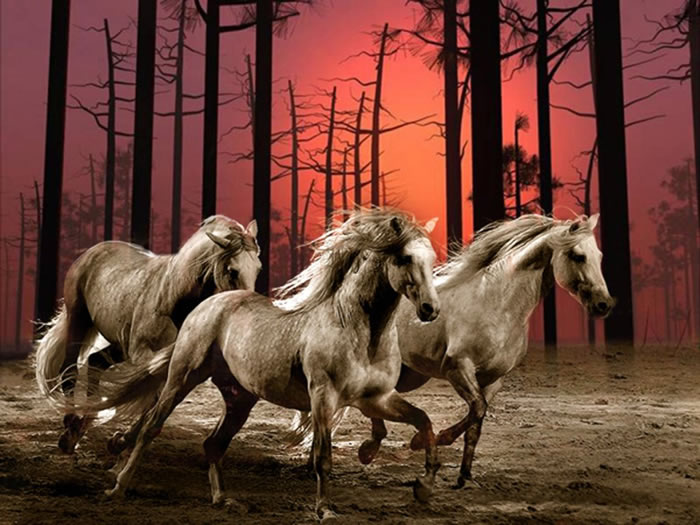 Cavalos Imagem 3