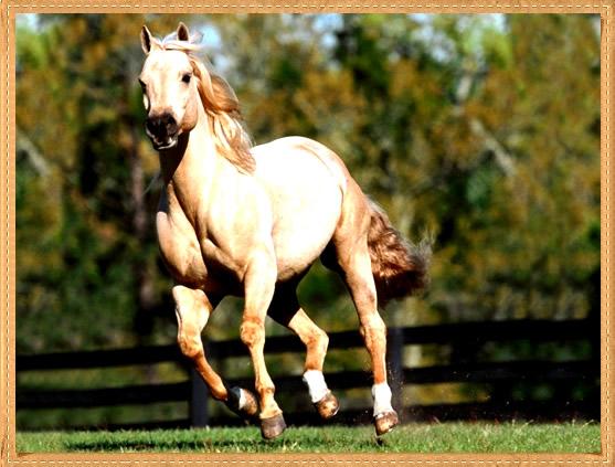Recado Para Orkut - Cavalos: 2