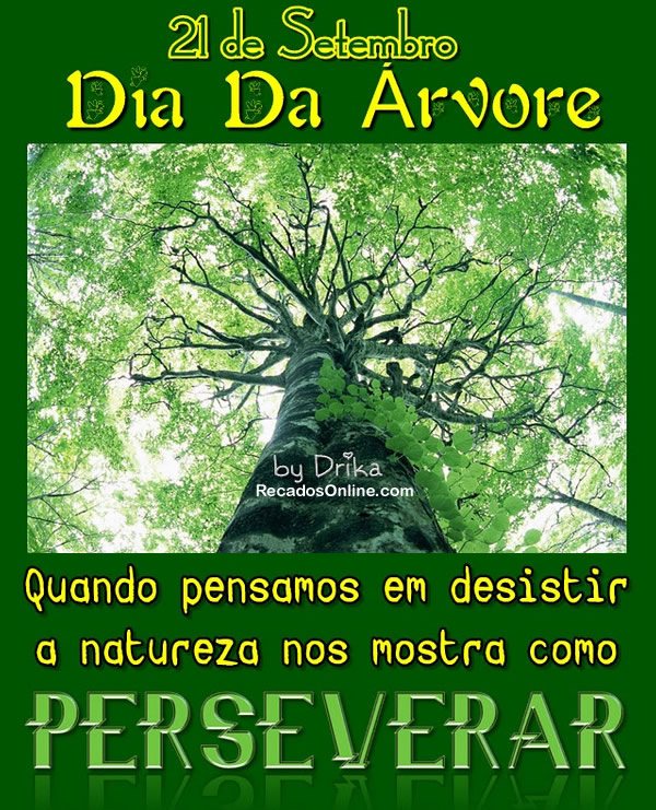 21 de Setembro Dia da Árvore Quando pensamos em desistir a natureza...