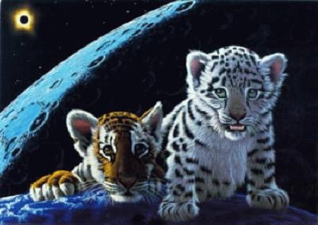 Tigres Imagem 3