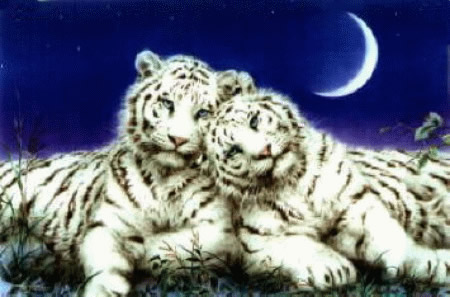 Tigres imagem 7