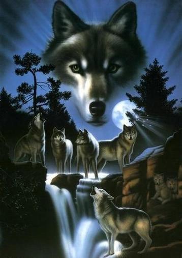 Lobos imagem 3