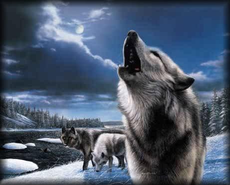 Lobos Imagem 6