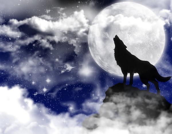 Lobos imagem 7
