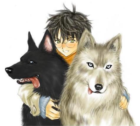 Lobos imagem 9