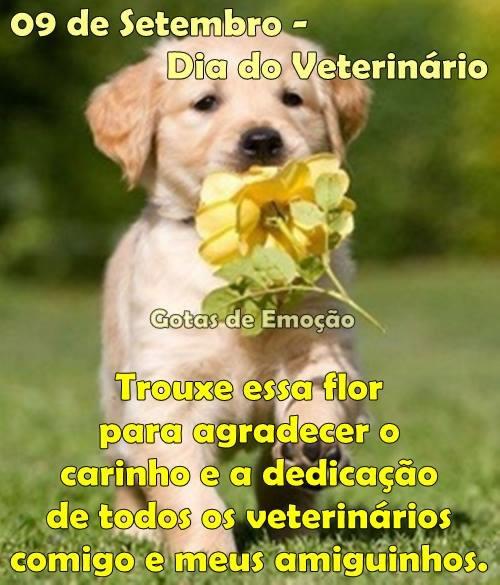 09 de Setembro - Dia do Veterinário. Trouxe essa flor para agradecer o carinho e a dedicação de todos os veterinários comigo e meus amiguinhos.