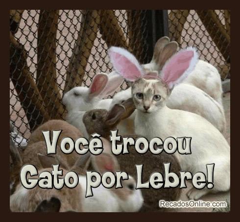 Você trocou Gato por Lebre!