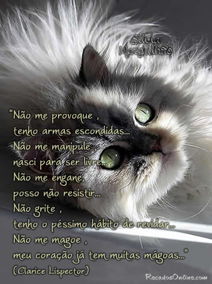 Escritores Brasileiros imagem 5