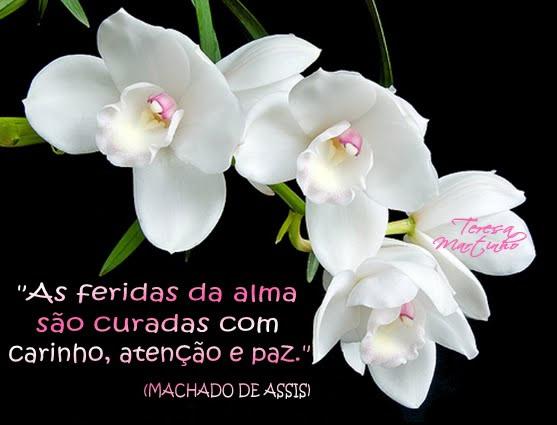 Escritores Brasileiros Imagem 8
