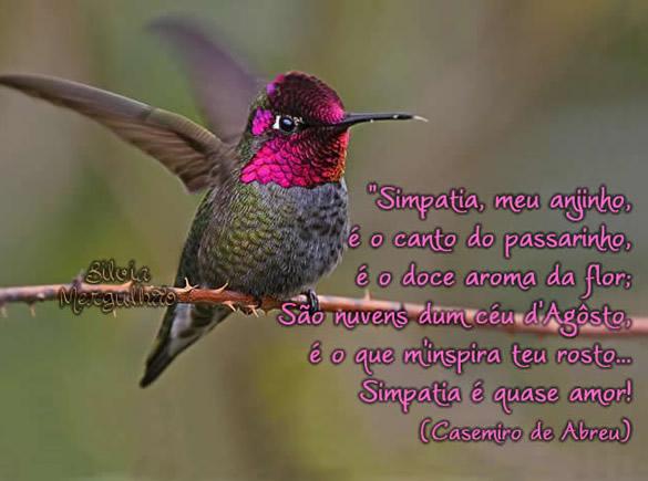 Simpatia, meu anjinho, É o canto de passarinho, É o doce aroma da flor; São nuvens dum céu de Agosto É o que me inspira teu rosto... Simpatia é...