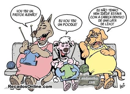 Humor com Animais Imagem 9