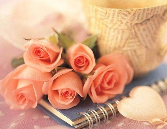 Rosas imagem 6