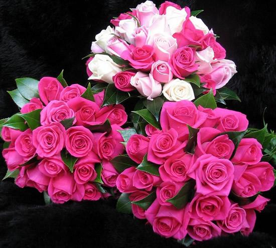 Rosas imagem 8