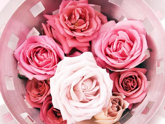 Rosas imagem 1