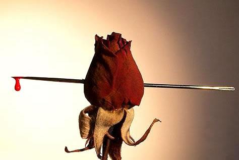Rosas Imagem 5