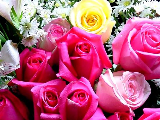 Rosas Imagem 4