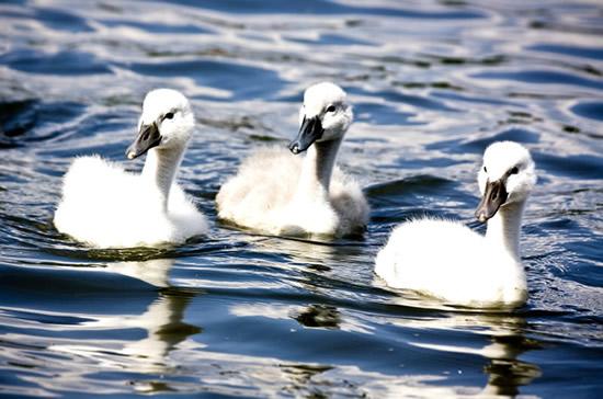 Aves Imagem 2