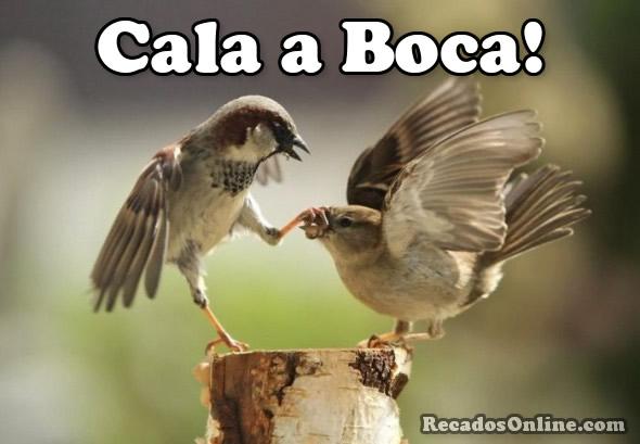 Cala Boca Imagem 1
