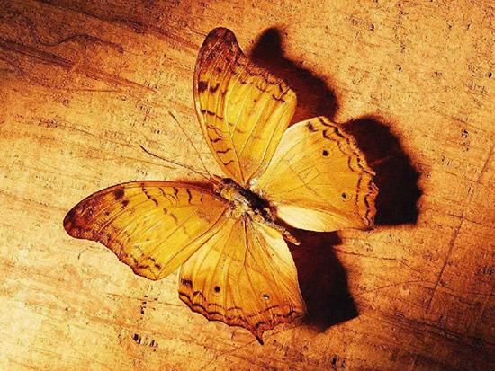Borboletas Imagem 9