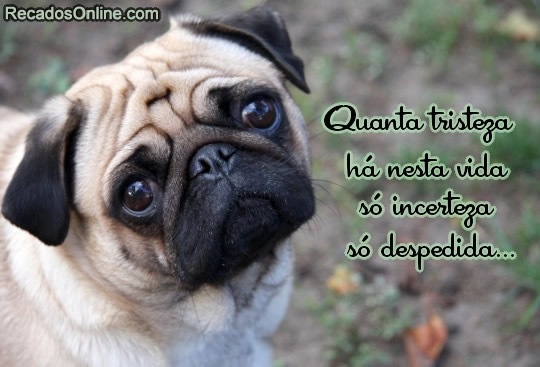 Quanta tristeza há nesta vida só incerteza só despedida...
