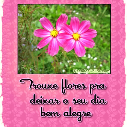 Flores imagem