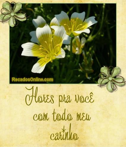 Flores pra você com todo meu carinho