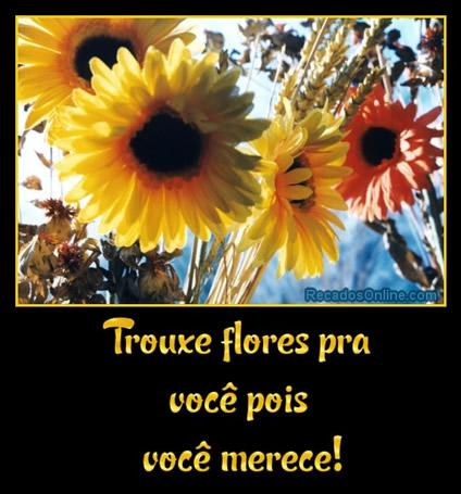 Flores Imagem 2