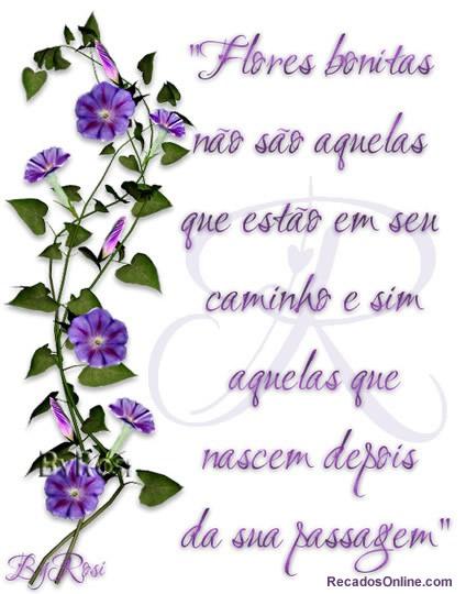 Flores Imagem 5