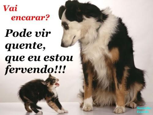 Cãezinhos Imagem 2