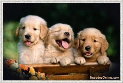 Cãezinhos Imagem 5