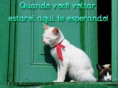 Gatinhos Imagem 1
