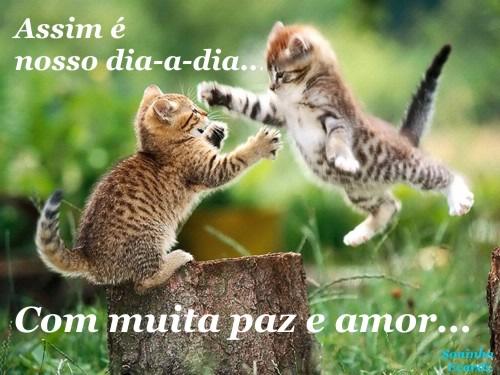 Gatinhos Imagem 3