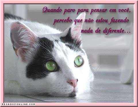 Gatinhos Imagem 7