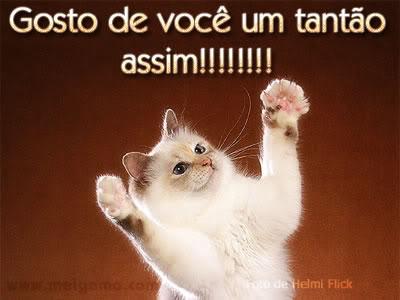 Gatinhos Imagem 5