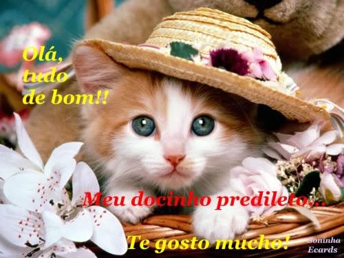 Gatinhos Imagem 6
