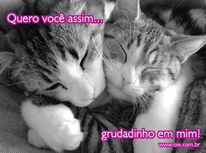 Gatinhos Imagem 8