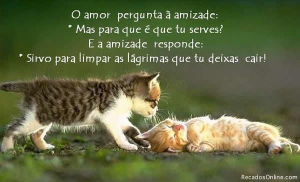 Gatinhos Imagem